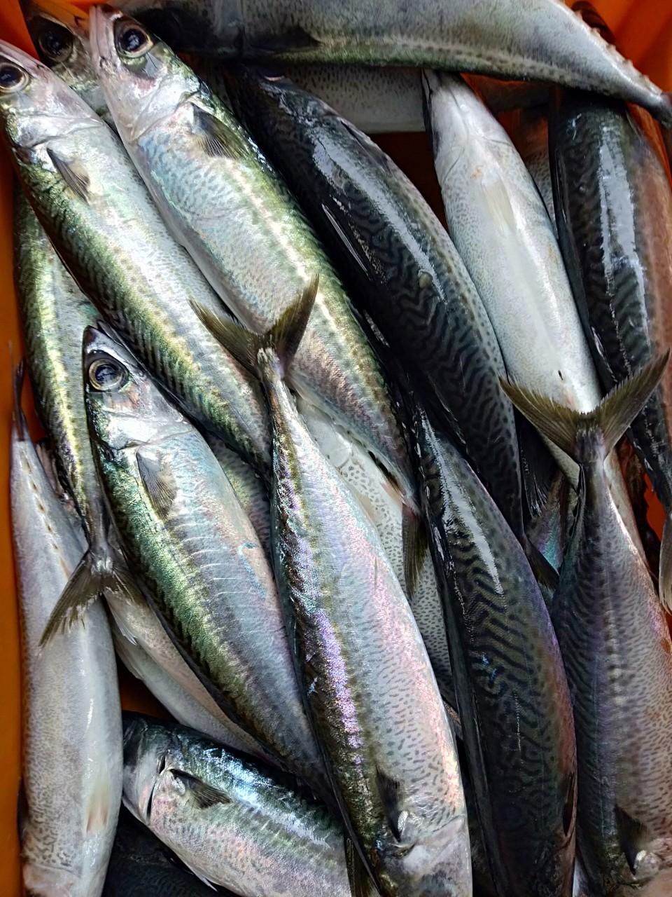 dinh dưỡng của cá nục